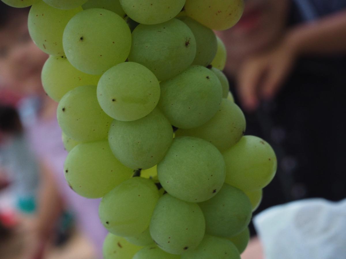 Grape 03